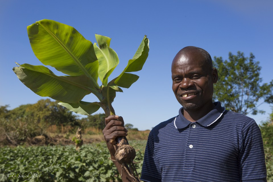 Crystal Schick/  CALGARY, AB -- John Mwanza holds the part of the banana tree to be planted on his farm located about 20 km outside Petauke, Zambia, on June 3, 2016. --  (Crystal Schick/)